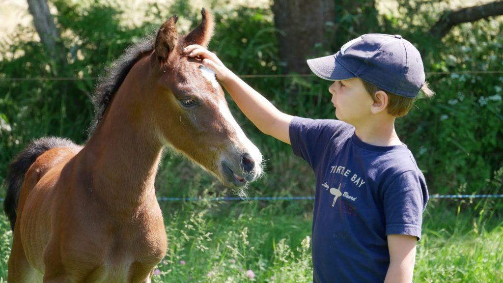 élevage de chevaux à Vannes et Lorient